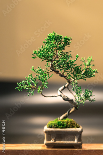 In de dag Bonsai 盆栽