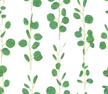Watercolor Green Floral Seamless Pattern With Eucalyptus Round Leaves. Hand Painted Pattern With Branches And Leaves Of Silver Dollar Eucalyptus Isolated On White Background.