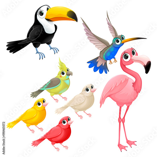 Group of funny tropical birds