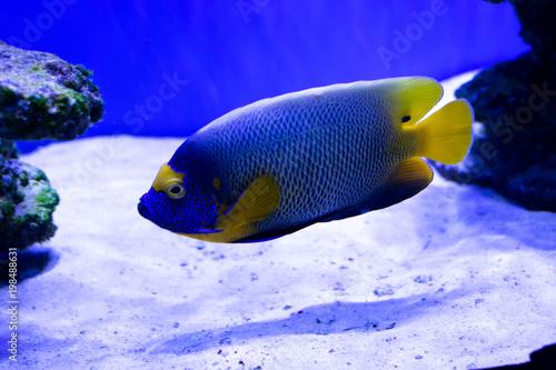Poster Sous-marin fish in a marine aquarium