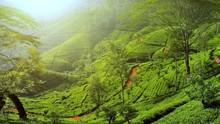 Beautiful Nature Landscape Of ...