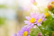 Beautiful Fresh Daisy Flowers ...