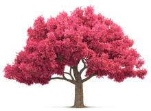 Cherry Blossom Tree Isolated 3...