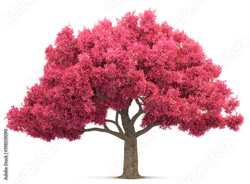 Billede på lærred cherry blossom tree isolated 3D illustration