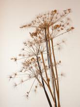 Dead Plant Tree Stem On White ...