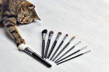 Charming Bengal Cat Chooses Hi...