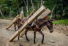 Horses Carrying Wood, Pulling ...