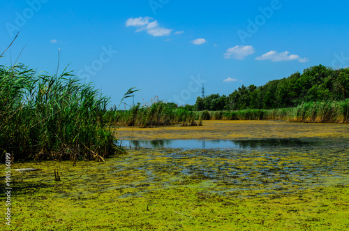 Green algae on surface of the lake Fototapeta