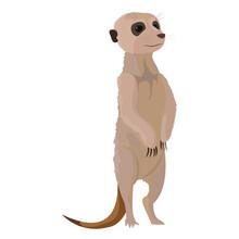 Cute Wild Meerkat Animal In Th...