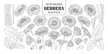Set Of Isolated Gerbera In 26 Styles.