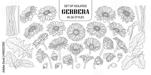 Set of isolated gerbera in 26 styles. Fototapeta