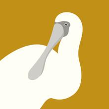 Spoonbill Ibis Head Vector Illustration Flat Style Profile