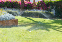 Sprinkler In Garden Watering The Lawn. Automatic Watering Lawns