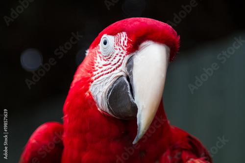 Tuinposter Papegaai Beautiful Red Parrot, Exotic Pet