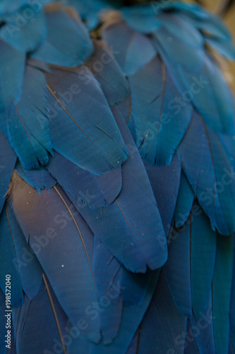 Beautiful Blue Feathers texture and background