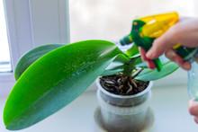 Female Hand Spraying Green Lea...