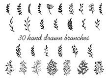 Hand Drawn Branches With Leaves Isolated On White Background. Decorative Floral Elements For Your Design. Vintage Vector
