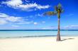 Coconut palm on white sandy beach, Boracay Island, Philippines