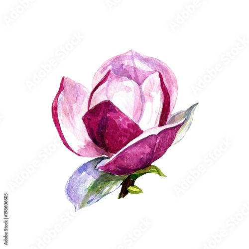 Deurstickers Magnolia Magnolia flower isolated on white background painted in watercolor.