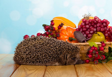 Basket Of Fruit And Vegetables, Nearby To Grey Prickly Hedgehog, On Table