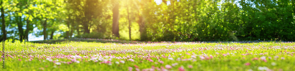Fototapety, obrazy: Meadow with lots of white and pink spring daisy flowers in sunny day