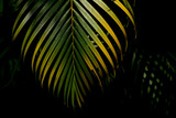 green and yellow palm leaves in the forest - 198612288