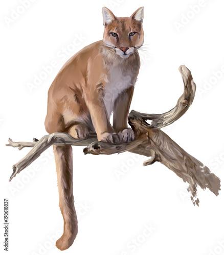 Cougar siedzi na suchym rysunku akwareli drzewa