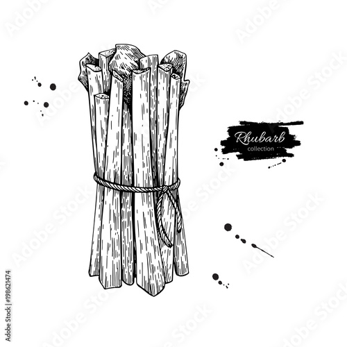 Rhubarb bunch vector drawing. Isolated hand drawn object. Vegeta Canvas Print