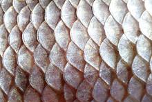 Scales Fish Fish Close-up
