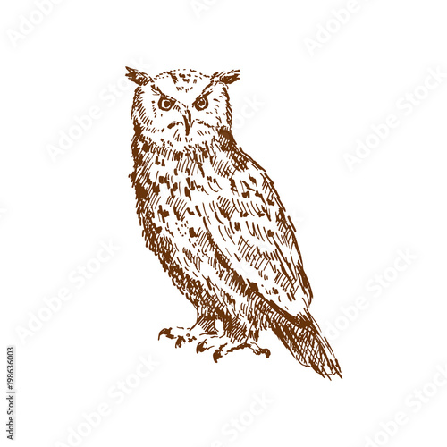 Keuken foto achterwand Uilen cartoon Hand drawn owl. Sketch, vector illustration.