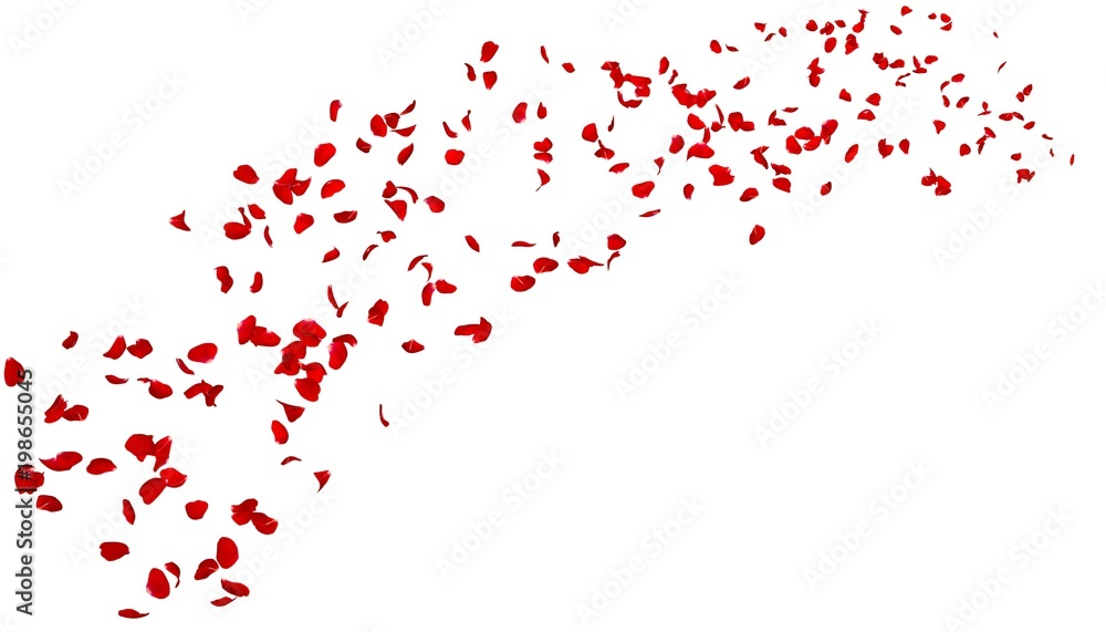 The petals of a dark red rose fly far into the distance