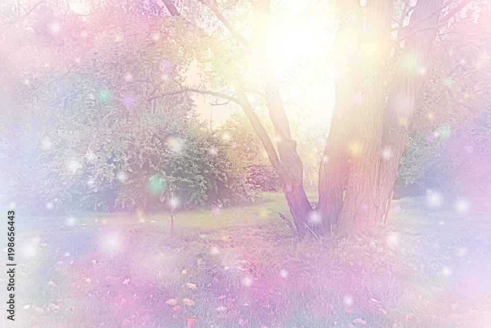 Fotografie, Obraz Spirit Orbs gathered around tree emitting