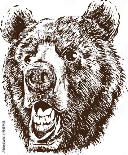 Poster Croquis dessinés à la main des animaux Head of a bear