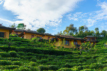 Chinese Home Among The Tea Plantation Or Farm With Blue Sky And Cloud