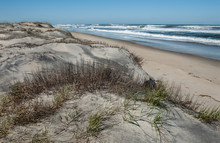 Dune Shoreline In North Caroli...