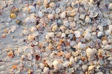 Clamp Shells