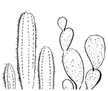 Outline Hand Drawn Vector Illustration With Two Cactuses For Cards And Posters Black On White Background