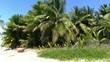 Dominican Republic - palm tree - island - carribean