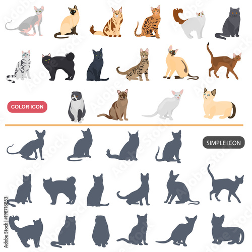 Fotografering  Color flat and simple cats breeds icons set