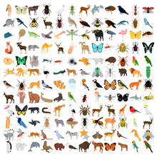 Huge Animals Color Flat Icons Set