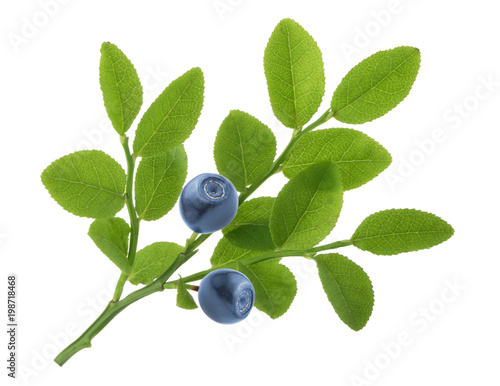 Blueberries on twig isolated on white background