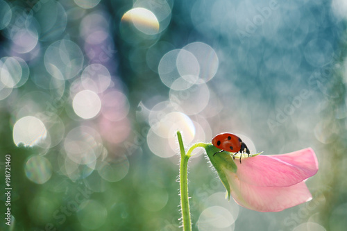 Small Red Ladybug likes to walk around the stem of the flowers in the garden