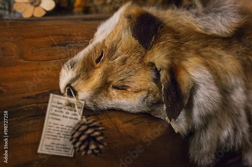 close-up of fox fur on walker Wallpaper Mural