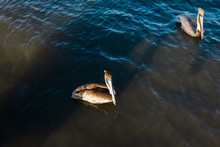 Florida Pelicans At Jensen Bea...