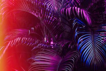 Panel Szklany Podświetlane Do łazienki Deep dark purple palm leaves pattern with bright red orange gradient effect, sun leak. Creative toned layout, horizontal