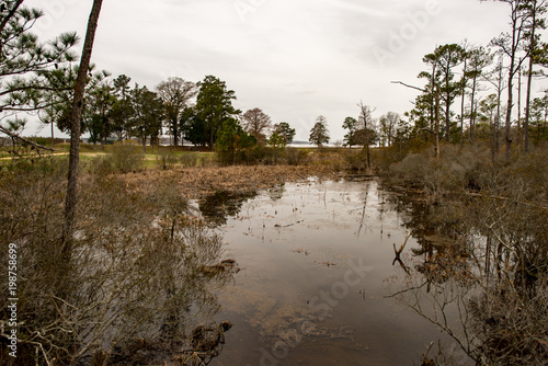 Photo  Swamp lake and trees in Jamestown, Virginia