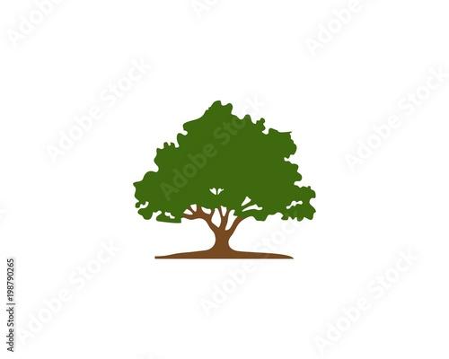 Fotografía Tree shape vector