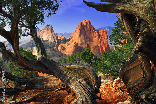 Fotografie, Obraz Garden Framed by Twisted Juniper Trees at the Garden of the Gods Colorado Spring