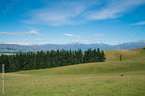 Poster Blauw High hill green glass farming with mountain background, New Zealand natural landscape background