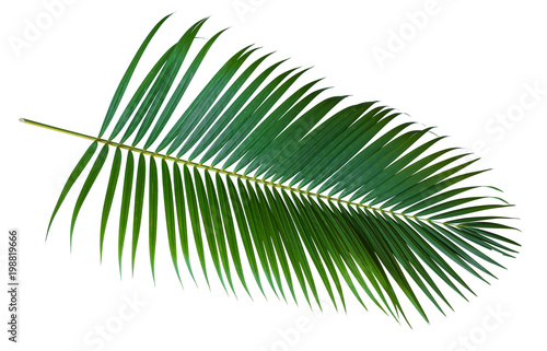 Tuinposter Palm boom Green leaves of palm tree